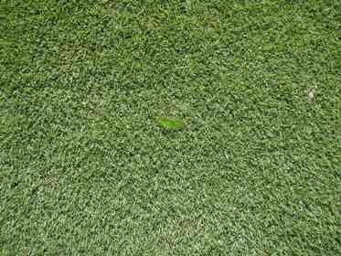 Zoysia Matrella has super fine dark green leaves it's premium manicured appearence suits full sun or shade conditions and has a low mowing requirement.